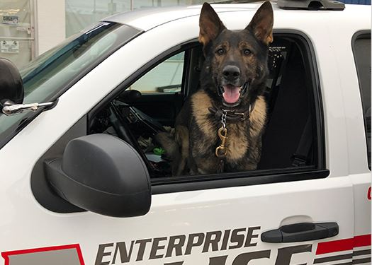 Police dog looking out of a police vehicle window