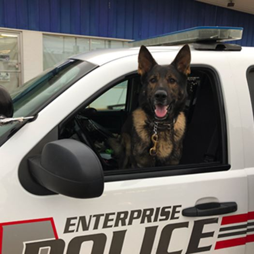 k 9 unit in a police SUV